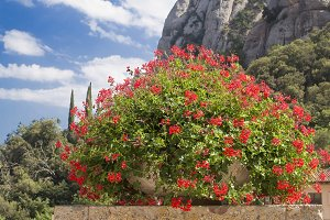 Red flowers with mountain and sky ba