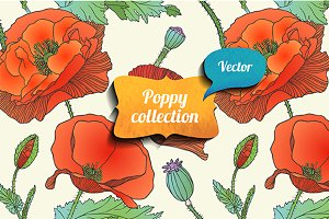 Poppy vector collection