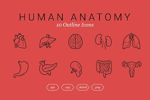 Human Anatomy (10 Outline Icons)