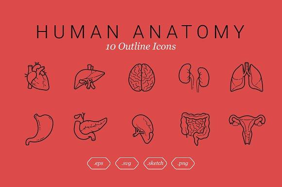 Human Anatomy (10 Outline Icons)
