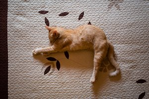 Orange tabby kitten sleeping