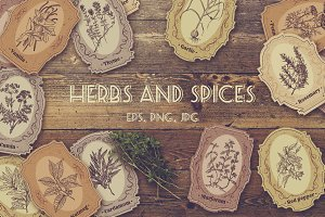 Herbs and spices. Vintage labels set