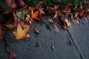 Autumn Leaves on Sidewalk (Photo)