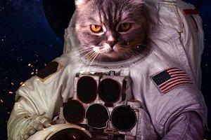 Catstronaut