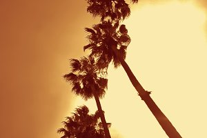 Row of Palm Trees (Photo)