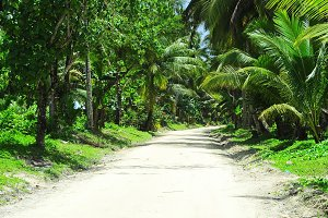 Road through the tropical jungle