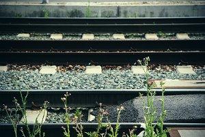 Weeds and Train Tracks (Photo)