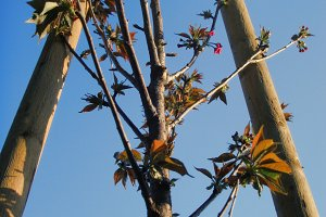 Helping a Tree Grow (Photo)