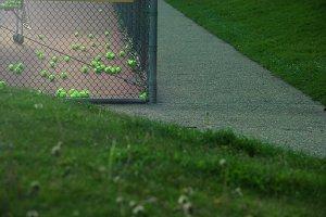 Leftover Tennis Balls (Photo)