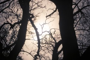 Glow Through Branches (Photo)