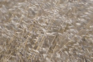 Pale Grass (Photo)