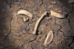 Old Dry Bones (Photo)