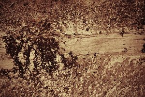 Dirt Texture 3 (Photo)