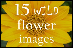 Wild flowers close ups | Pack #1
