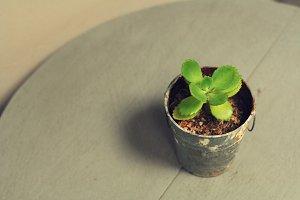 Tiny tree in pot
