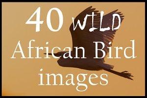 African Wild Birds | Pack #1