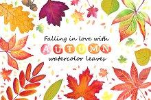 Autumn leaves. Watercolor.
