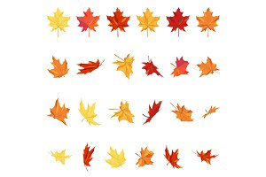 Maple Leaves Set