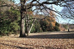 Park near Meji Jingu Shrine