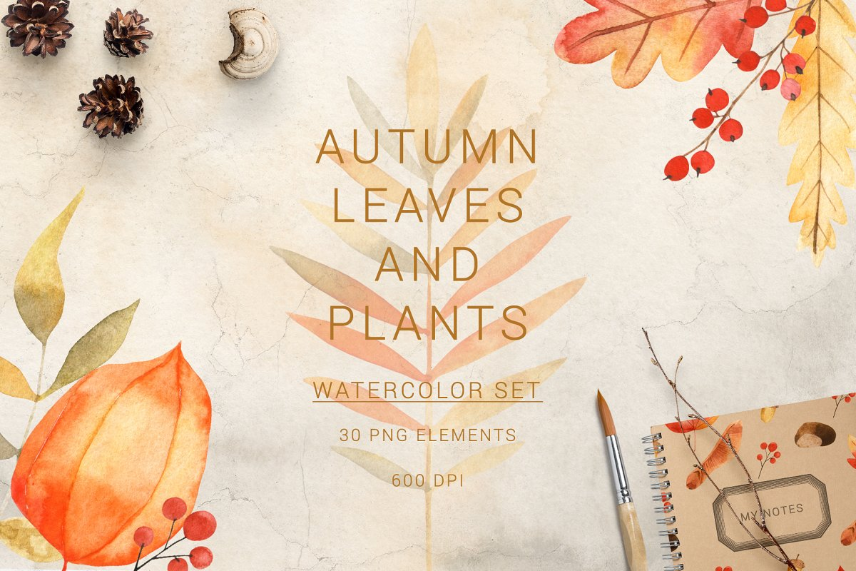 Watercolor autumn leaves and plants