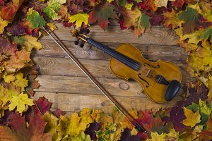 Violin against the backdrop of autum
