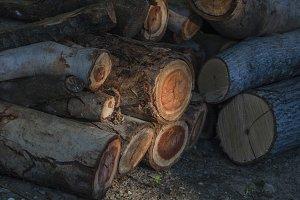 Spot of Sunlight on Logs (Photo)