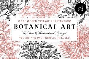 372 Vintage Botanical Illustrations