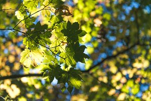 leaves in the trees