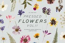 Pressed Dry Flowers & Herbs Vol.2
