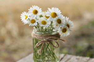 Little daisy flowers in a glass jar