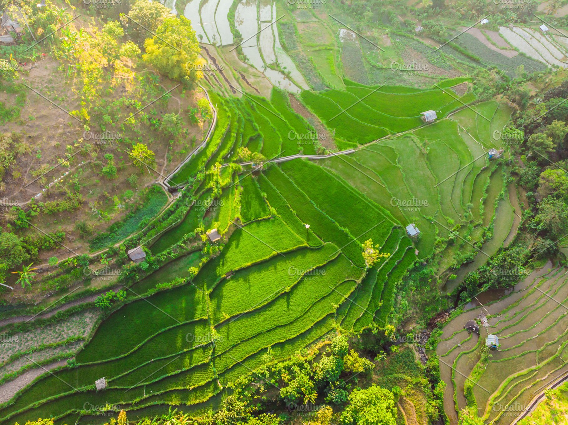 Green cascade rice field plantation