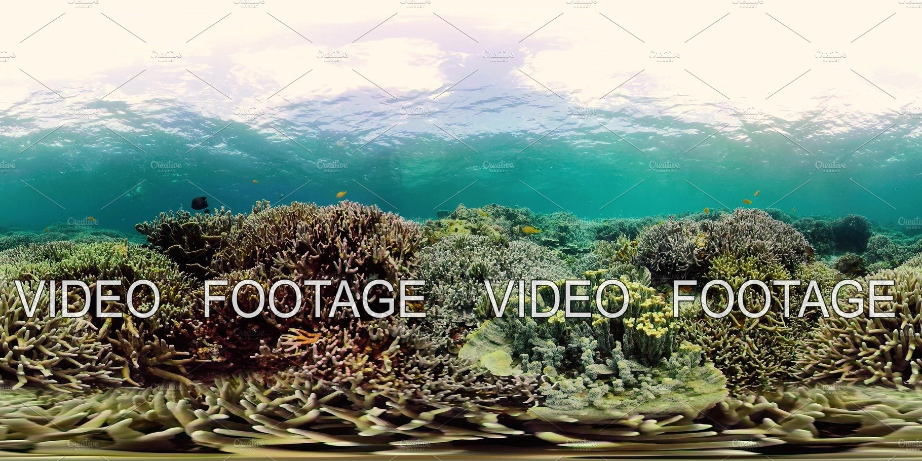 Coral reef and tropical fish 360VR