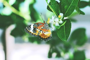 Butterfly nature V.2