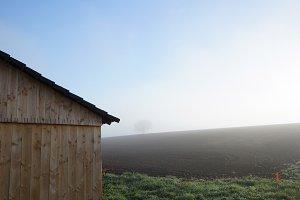 morning shed