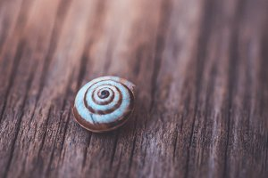 snail , escargot