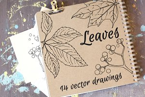 Leaves. Vector drawings
