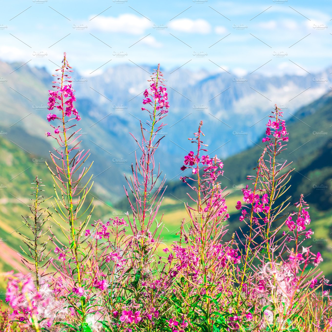 Swiss Alps With Wild Pink Flowers Nature Photos Creative Market