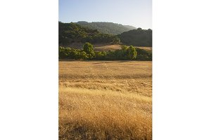 Golden Grass and Hills (Photo)