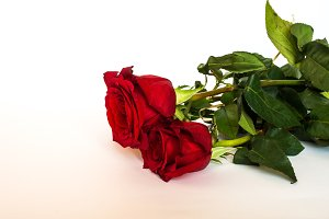 Three red roses 3