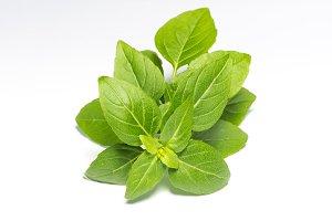 Fresh green leaf basil 2