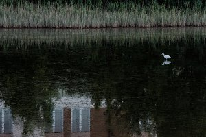 A bird in a pond with reflection
