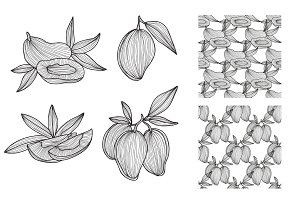 Hand Drawn Mangoes and Patterns