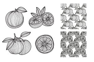 Hand Drawn Grapefruits and Patterns