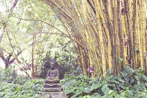 Buddha & the Bamboo