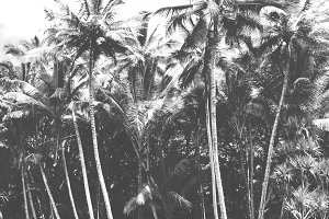 Palm Tree Field