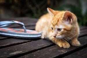 cat cub on wood