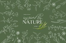 Botanical Line Art Illustrations V1