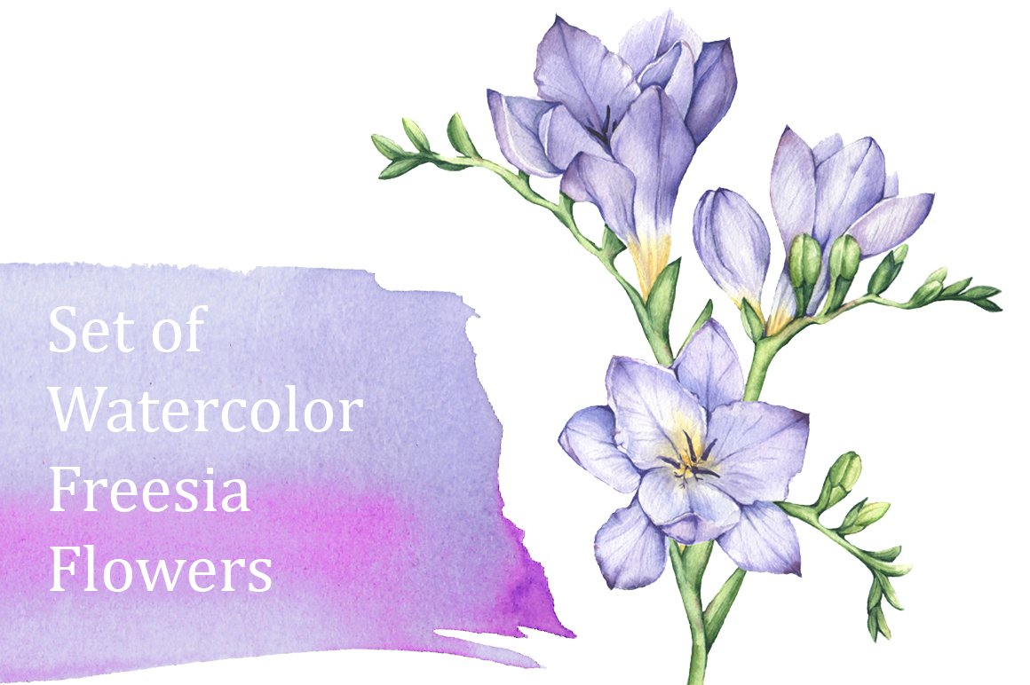 Set of Watercolor Freesia Flowers ~ Illustrations ...