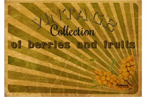 Vintage collection. Fruits, berries.