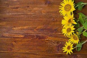 sunflower  wooden background